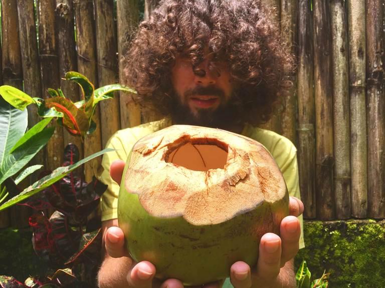 Indonesia, Bali, Ubud, Индонезия, Бали, Убуд, кокос, coconut