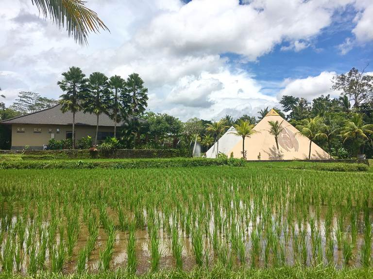 Indonesia, Bali, Ubud, Индонезия, Бали, Убуд, rice field, рисовые поля