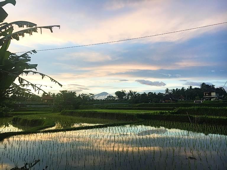 рисовые террасы бали, тегаллаланг, убуд