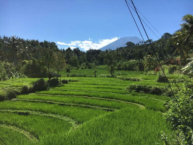 Водный дворец Тиртаганга на Бали, рисовые поля, агунг
