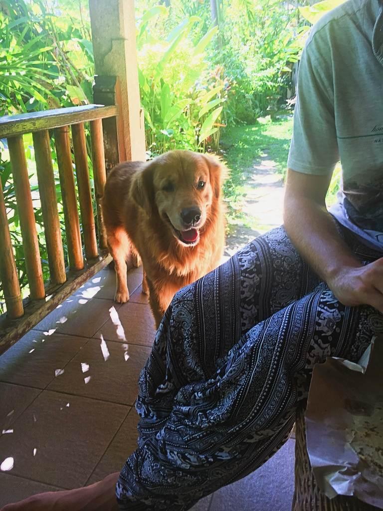 Водный дворец Тиртаганга на Бали, пёс